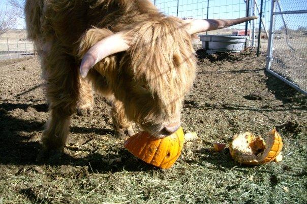 Buster - Pumpkins